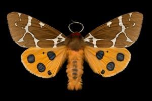Moths promo photo